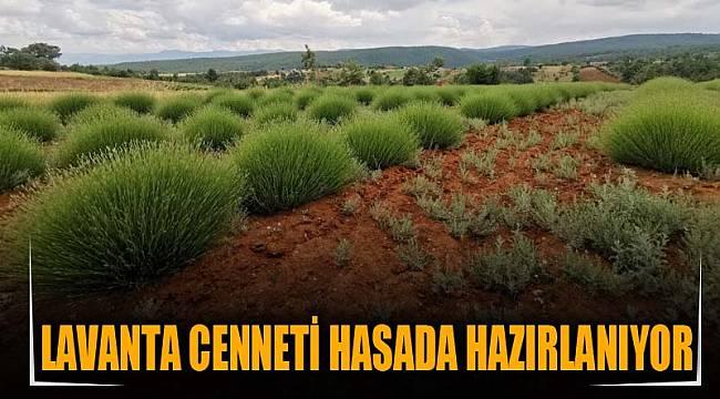 LAVANTA CENNETİ HASADA HAZIRLANIYOR