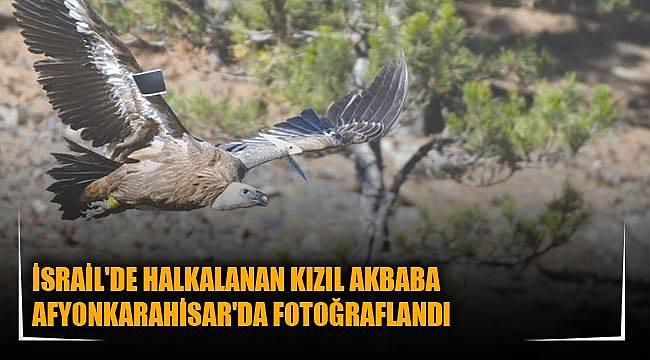 İSRAİL'DE HALKALANAN KIZIL AKBABA AFYONKARAHİSAR'DA FOTOĞRAFLANDI