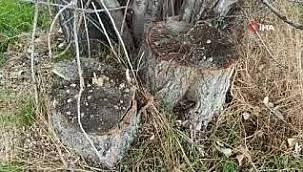 Sabah tarlasına gittiğinde dikili 20 ağacının yerinde olmadığını gördü